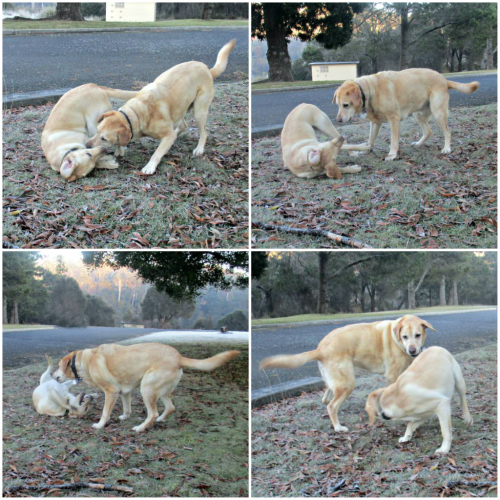 Hedy and Sandy play Rafa's game