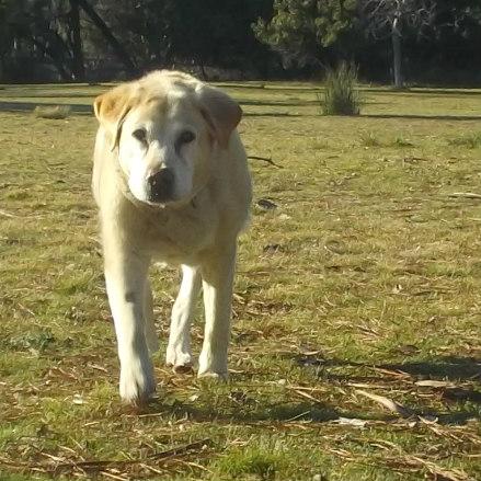 Peri having a little run