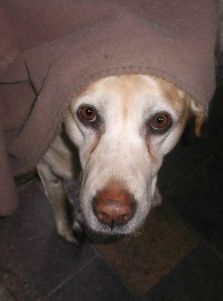 Peri in the dog door