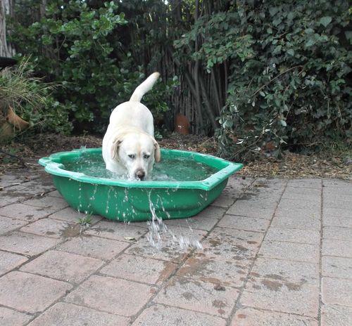 Gilly pool fun