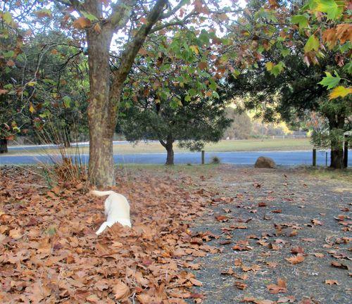 Autumn gilly