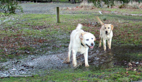 Gilly and Hedy in the mud
