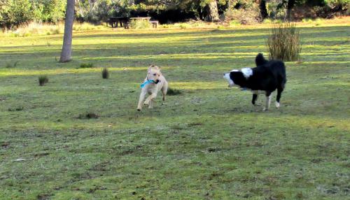 Hedy, stick. Rafa , bark