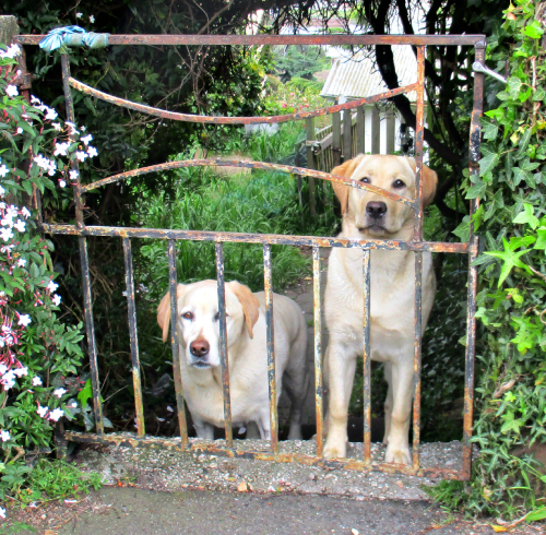 Gilly and Hedy waiting at the gate