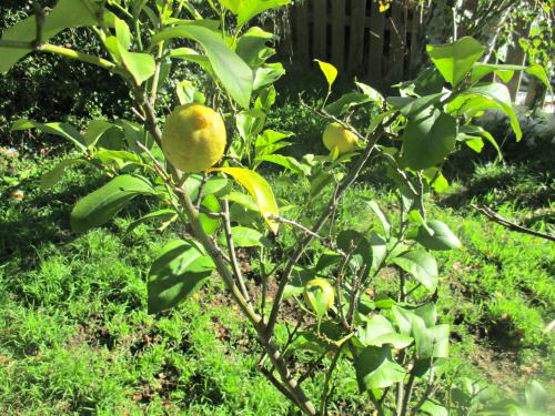 La la la la lemon