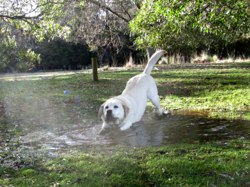 Gilly loves the muddy puddle