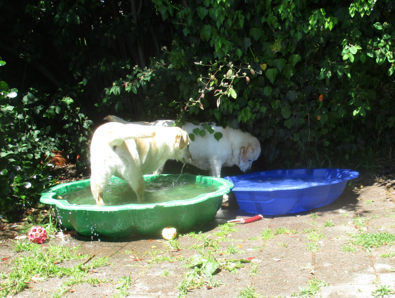 Investigating the new paddle pool
