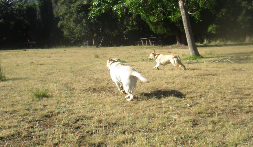 Gilly and Hedy running fast