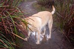 Peri_loves_the_puddles_and_the_smel
