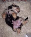 Baby_poppy_the_puppy