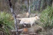 Wild_bush_rangers_2