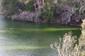 Bluegreen_algae