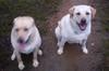Happy_rainy_dogs