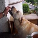 Harkis_morning_tea_time