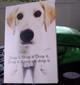Labradors_present
