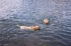 Swam_and_they_swam_all_over_the_dam